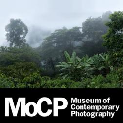 http://www.camiloechavarria.com/files/gimgs/th-44_MoCP2.jpg